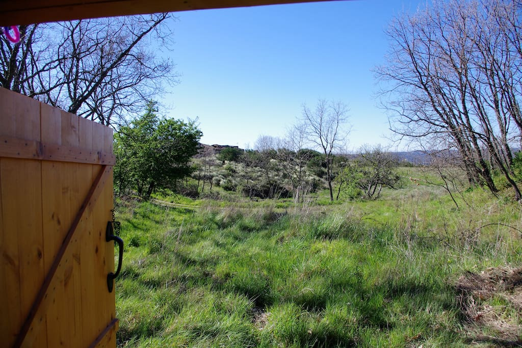 View from the yurt
