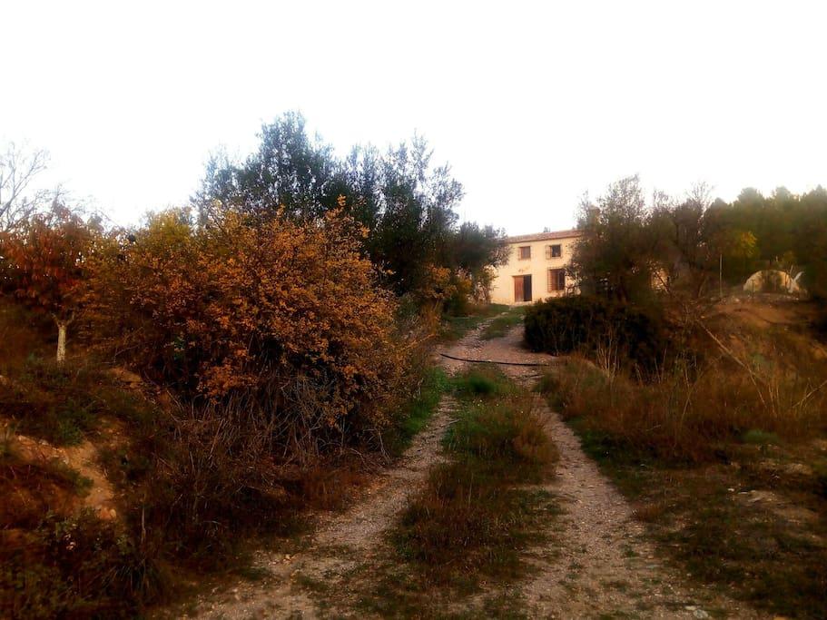 camino de llegada a la casa