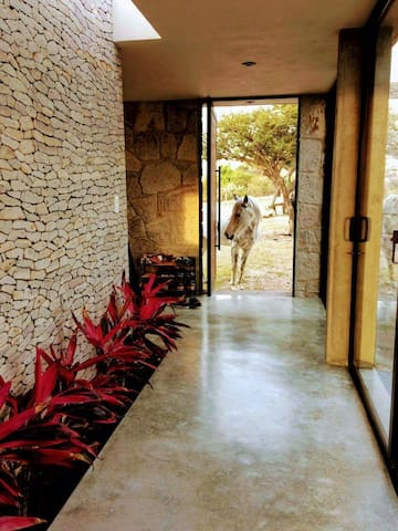 Healing Ranch Retreat - San Miguel de Allende