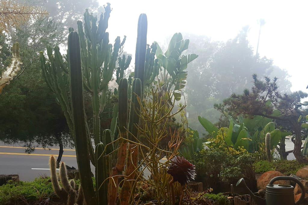 Cactus garden from 2nd floor suite