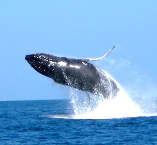 The discount card gives you discounts on whale watch tickets from several different companies.