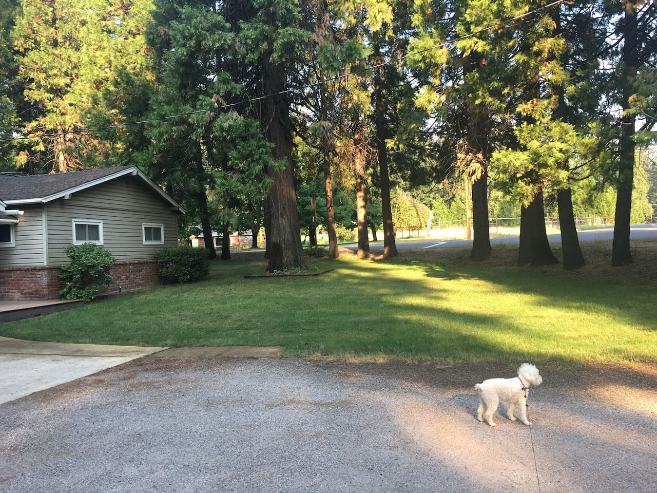 """Northwest side and lawn of """"Raven's Song"""" Air B&B with House mascot """"Bear"""".  Easy access double driveway and wide turnaround parking space."""