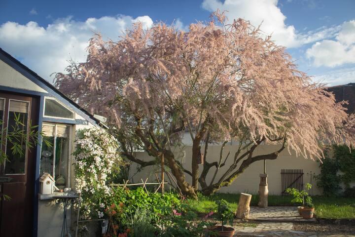 """""""La Merlette"""" chambre cosy au calme joli jardin !"""