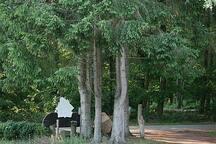 Romantische pipowagen op maar 2,5 km van Wildlands