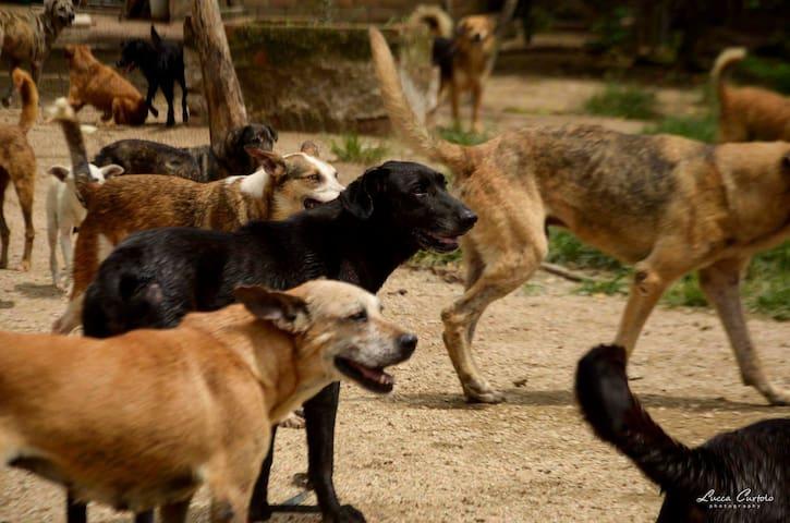 Santuário de cães e gatos - Bairro Lami - Porto Alegre