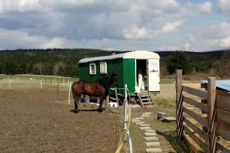 Maringotka na ranči u lesa. - Krasová