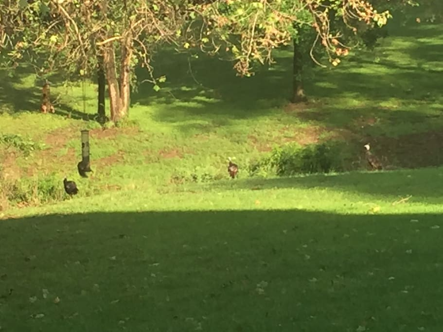 Multi-acre property presents opportunities to see deer and song birds.