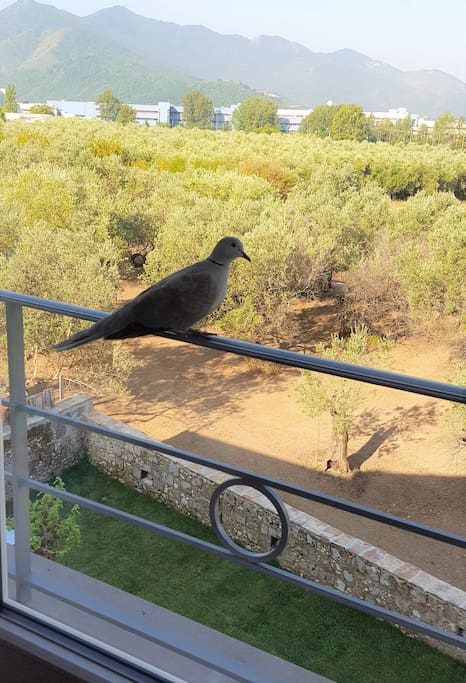 La Tortora l'uccello a cui è dedicata la nostra casa che nidifica sul nostro tetto