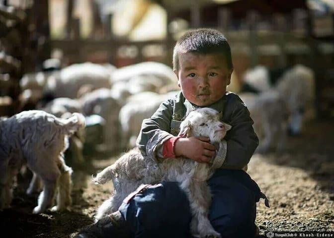 Adventure Tour to the Gobi! - Ulaanbaatar - Camper