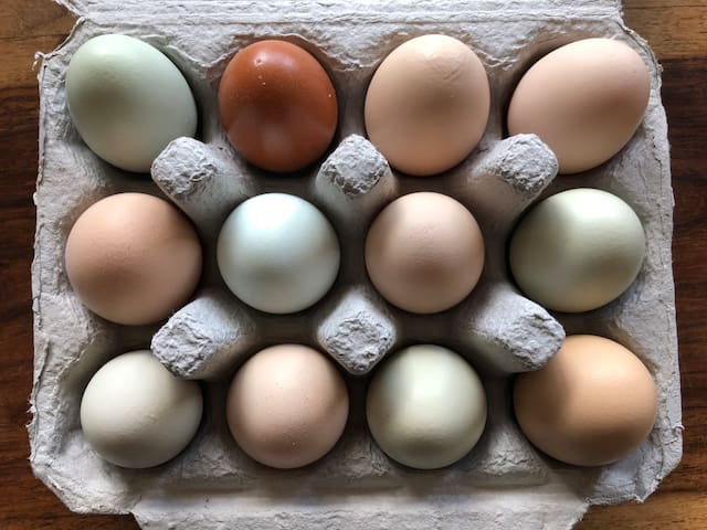 Guests can purchase our fresh organic eggs to enjoy for breakfast.