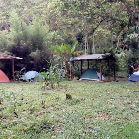 Hamil camping.