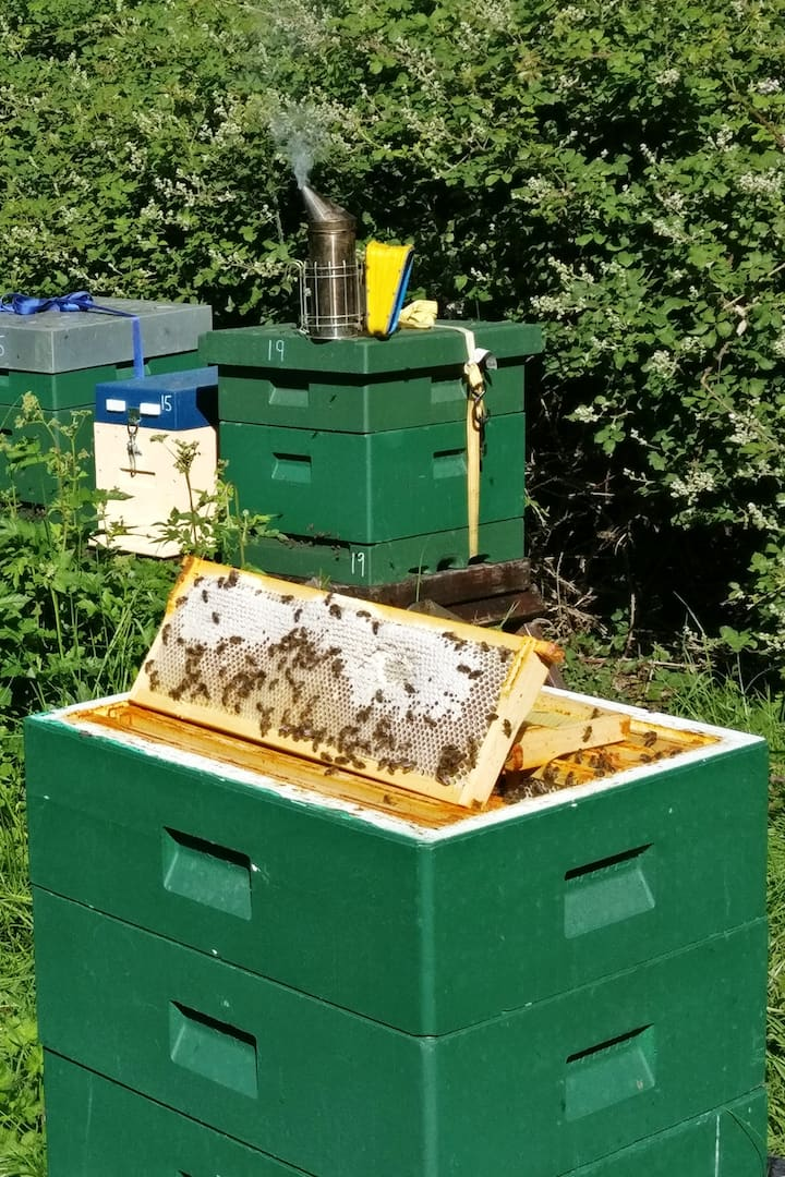 Frame of spring honey in Killruddery