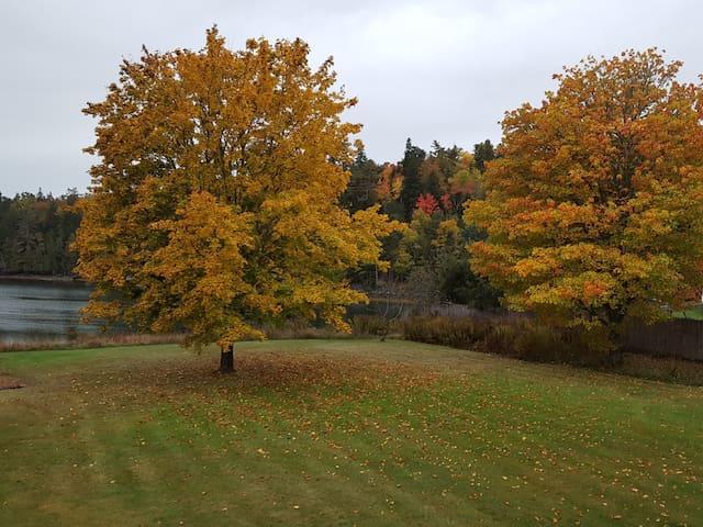 Backyard in fall