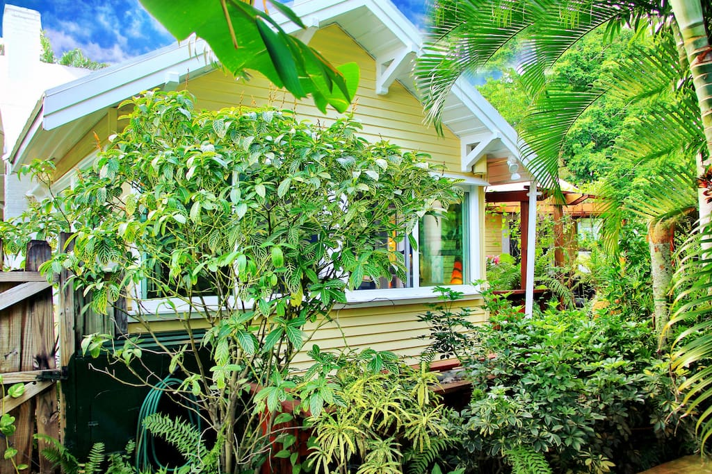 Tropical Plants on 3 sides of the house
