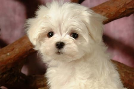 Pet friendly villa. Small pets only - Peak Crossing  - 独立屋
