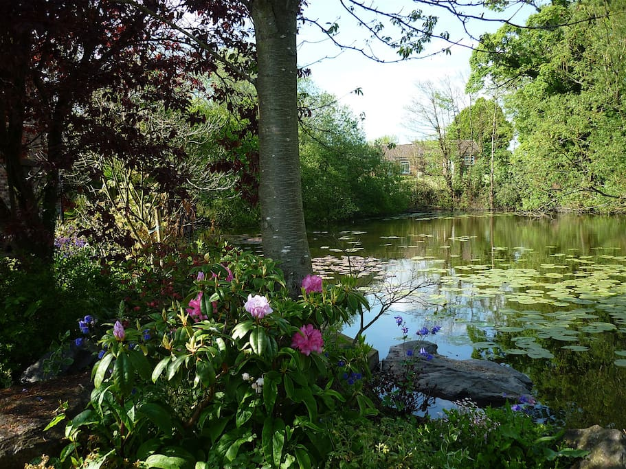 This is our pond at the front of our home. So tranquil.