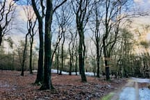 A Winter walk through the nearby forest of Vierhouten - you'll pass by ancient grave mounts, created approx. 1100 BC.