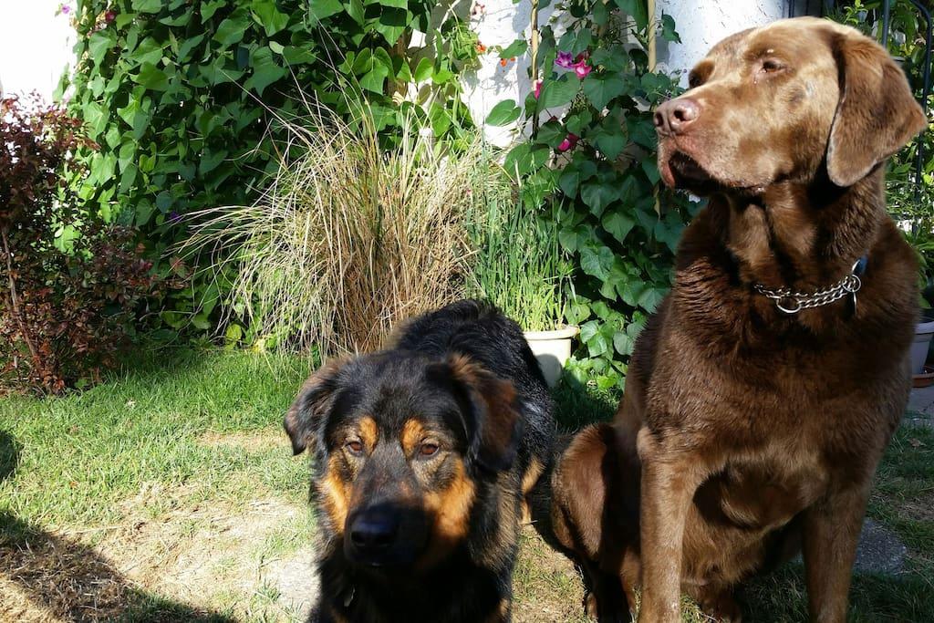 Kaluha and Tripp - the Pups