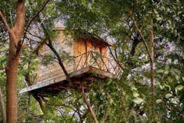 Cabaña en un árbol. Fertilidad natural.