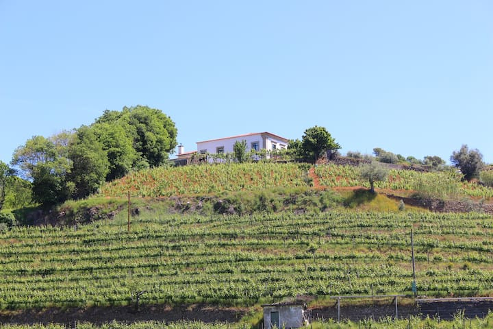 Suite  in Douro Valley