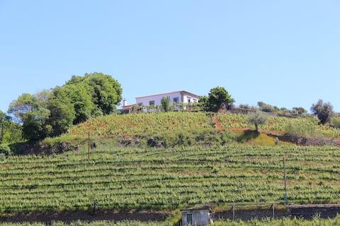 Suite  in Douro Valley
