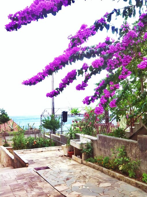 relax in the garden with sea view