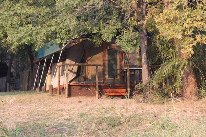 Ndhovu Safari Lodge - Family Tent
