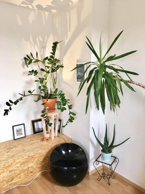 Présence de plantes dans tout le penthouse.