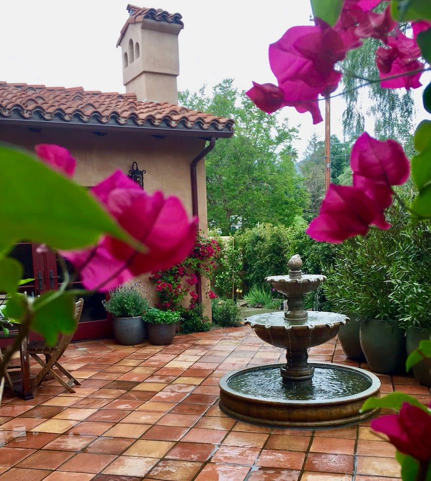 The bougainvillea is in bloom!