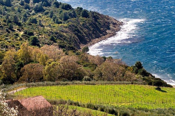 Vignazzurra, sogno tra mare e terra - Castellabate - Huis