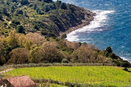 Vignazzurra, sogno tra mare e terra - Castellabate - Rumah