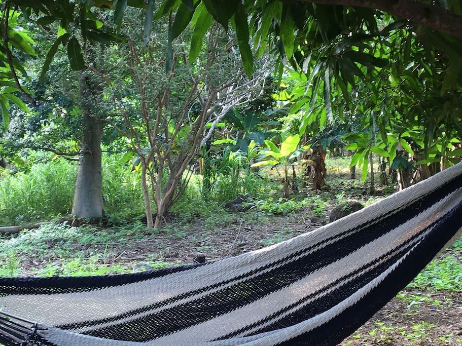 Garden with patio and hammocks