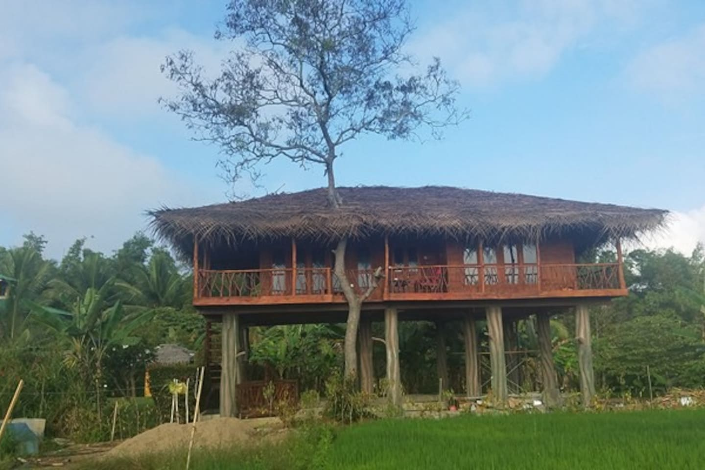 FAMILY TREE HOUSE WITH TWO INTERCONNECTING  ROOMS , OVERLOOKING THE LUSH GREEN PADDY FIELDS AND THE LION ROCK