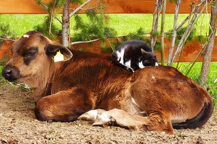 Wohnen am Bauernhof