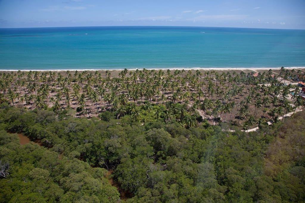 Vista aérea do manguezal  e do coqueiral da praia de Mamucabinhas