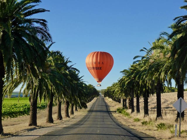 Fly in a hot air balloon over the avenue of date palms.