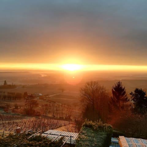 Vue panoramique sur le vignoble