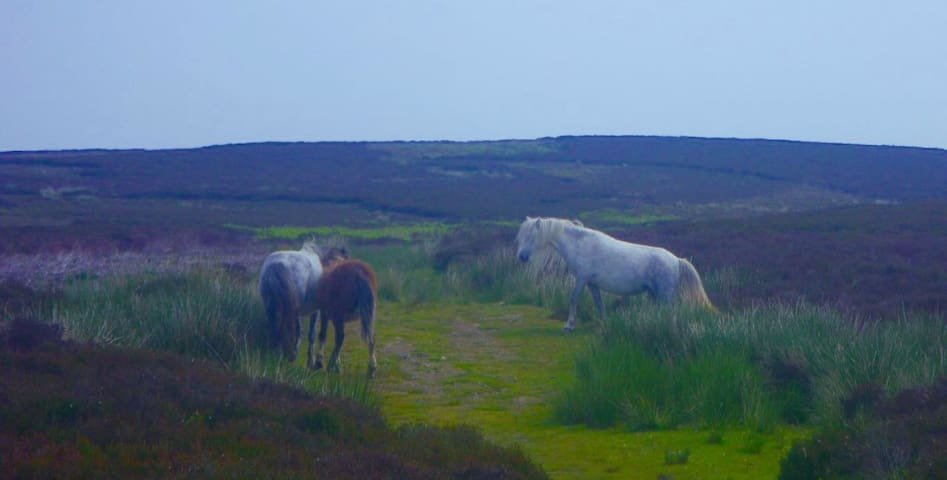 Ponies on nearby Longmynd