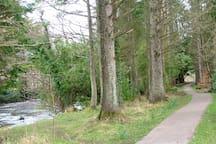 Village wood walk