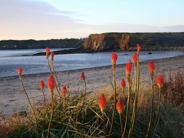 Clifftop beachside 3 bed cottage - Loughshinny - Rumah