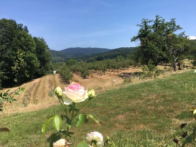 Naturoase im Kirschblütental