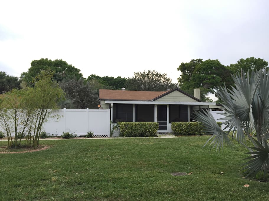 Front yard bamboo & specimen palm trees