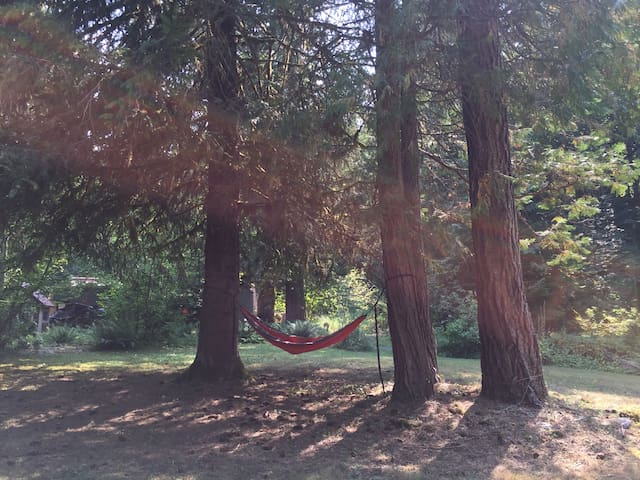 Nice collaboration of trees and hammock.