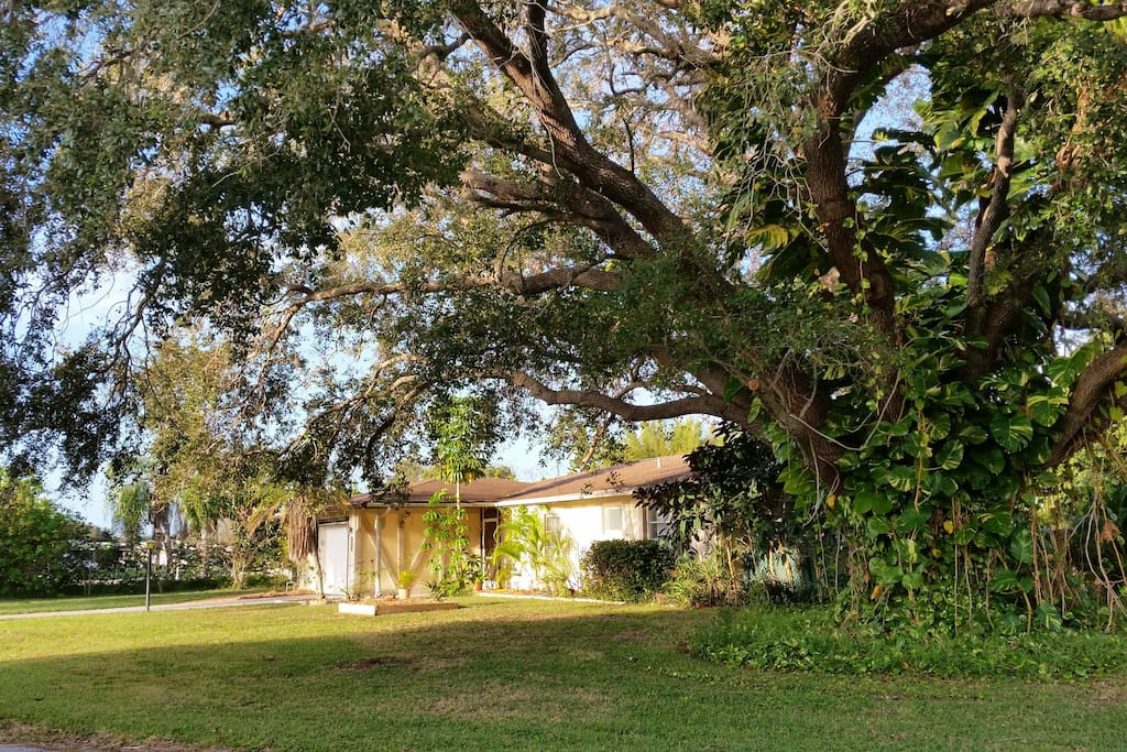 The amazing oak tree on the right side of the property.