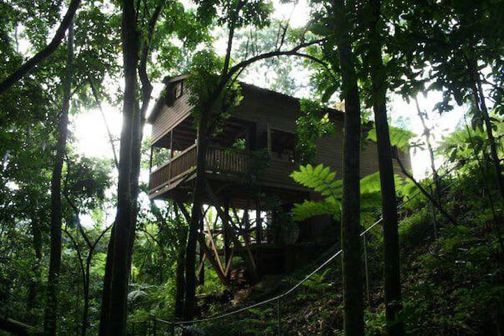 Tree House - Utuado - House