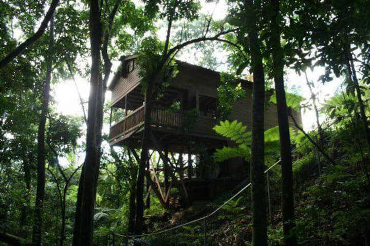 El Zumbador, Tree House