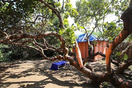 Hidden Hut -  inside a tree - Agonda