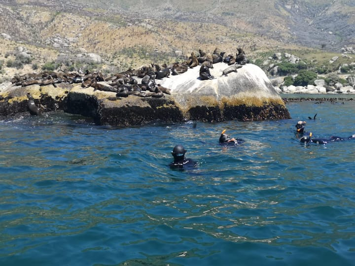 Snorkeling with Seals...