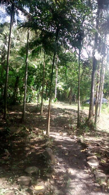 Trilhas entre árvores nativas e frutíferas...