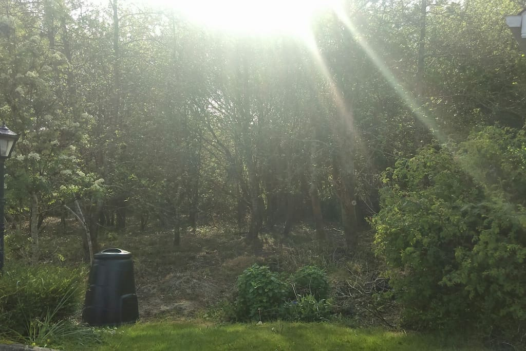 recycling sun and trees work g together